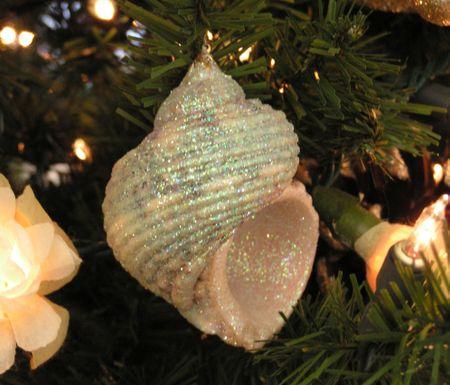 Hilton Head Shell