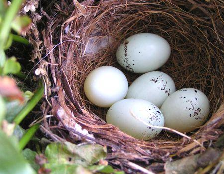 Nest eggs 2009