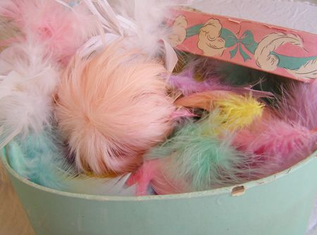Feathers in box