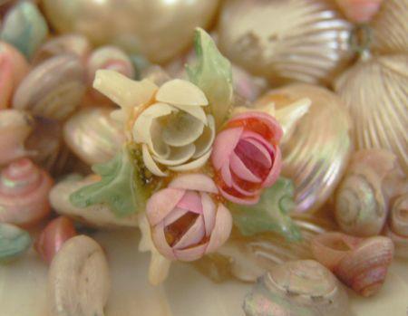 Shells6
