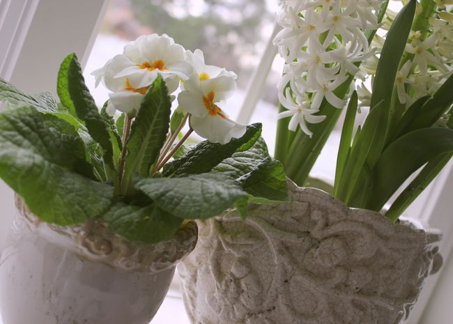 Spring on the sill